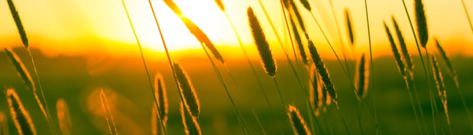 summer-sun-yellow-photography 1